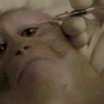 Experimentación en animales no humanos: tortura y capricho
